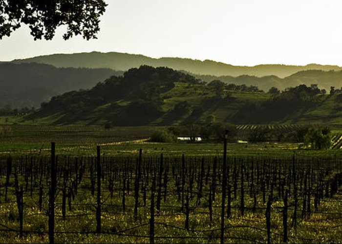Agriculture Greeting Card featuring the photograph Napa Valley Panorama From The Silverado Trail by Mark Emmerson