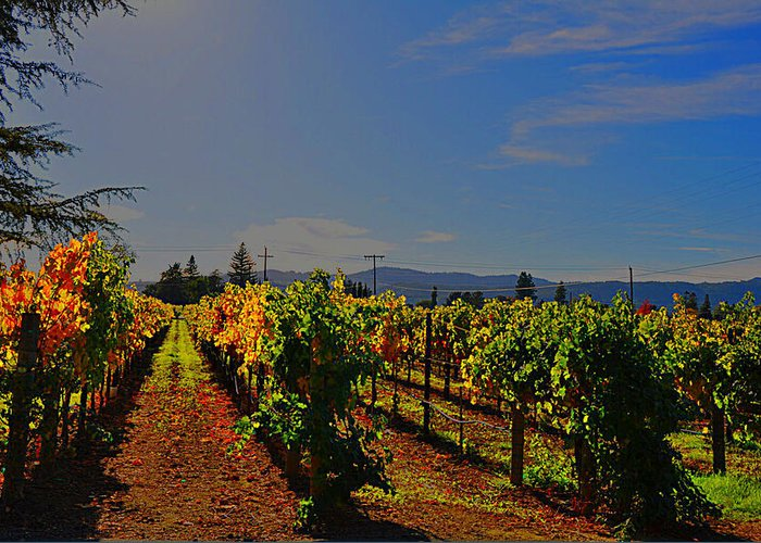 Napa Valley Greeting Card featuring the photograph Napa Valley by Vijay Sharon Govender
