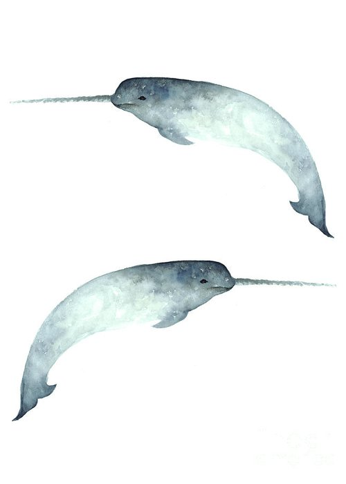 Narwhal Greeting Cards