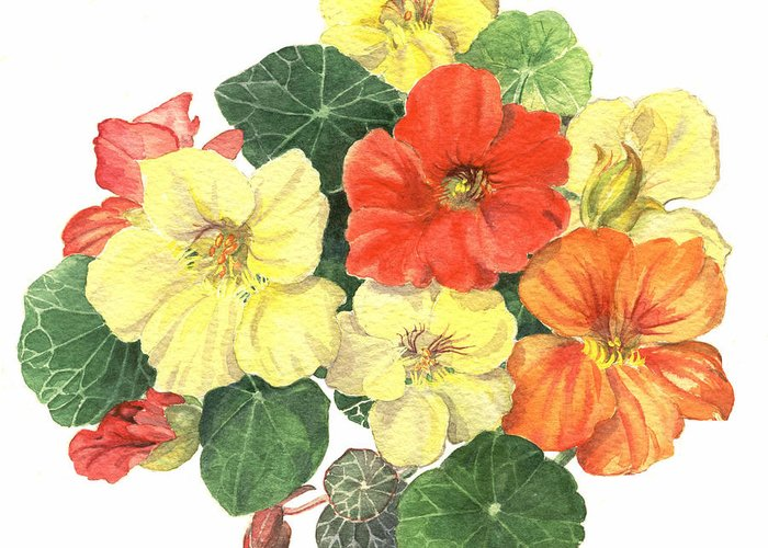 Flower Greeting Card featuring the painting Nasturtiums by Maureen Carter