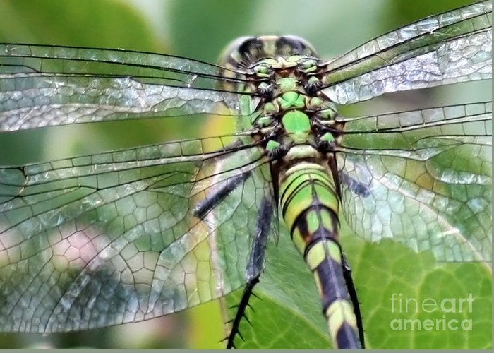 Nature Greeting Card featuring the photograph Natural Stained Glass by Carol Groenen