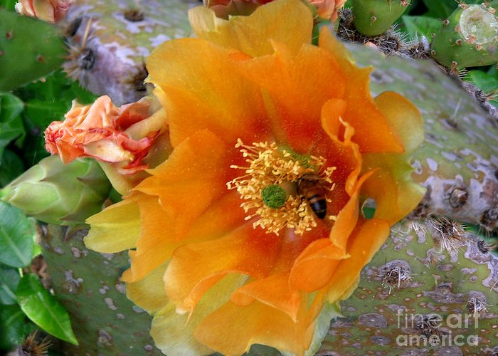 Nature Greeting Card featuring the photograph Nature In The Wild - Cactus Honey by Lucyna A M Green