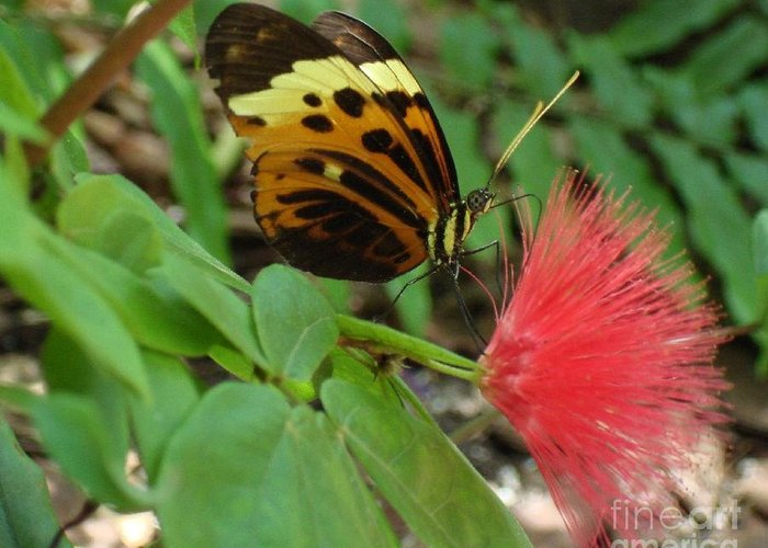 Butterfly Greeting Card featuring the photograph Nature by Robyn Leakey