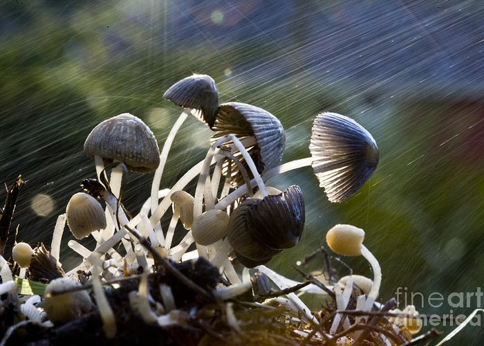Mushrooms Rain Showers Umbrellas Nature Fungi Greeting Card featuring the photograph Nature by Sheila Smart Fine Art Photography