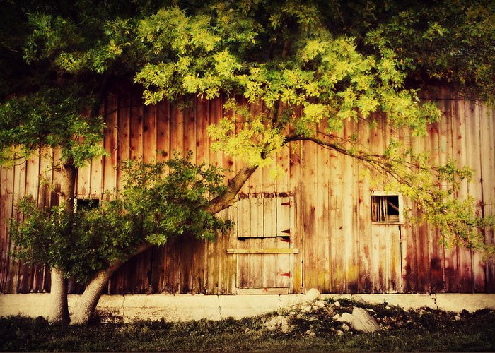 Barn Greeting Card featuring the photograph Natures Awning by Julie Hamilton
