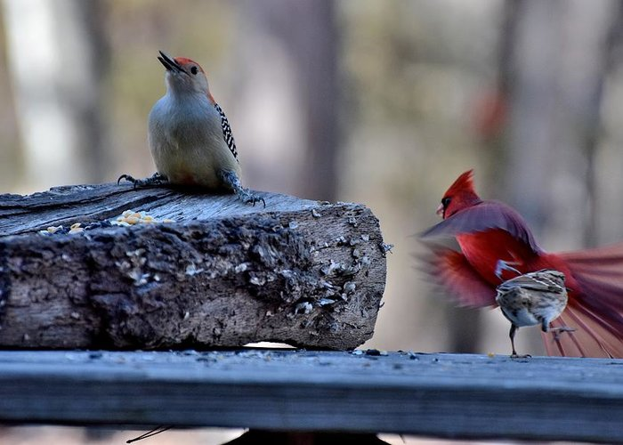 Bird Greeting Card featuring the photograph Natures Birds 68 by Lawrence Hess
