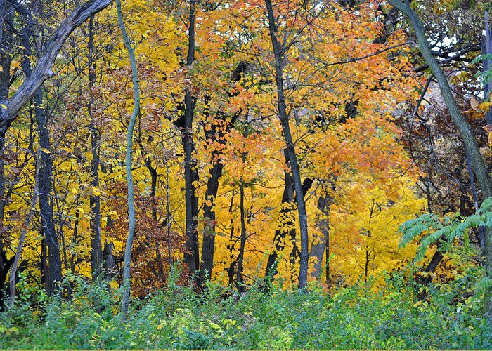 Landscape Greeting Card featuring the photograph Nature's Colors by Tom Mullen