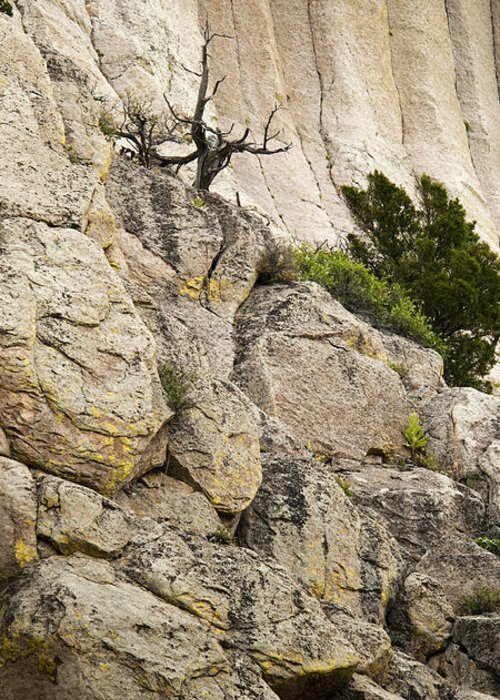 Cliff Greeting Card featuring the photograph Natures Selection by Chad Davis