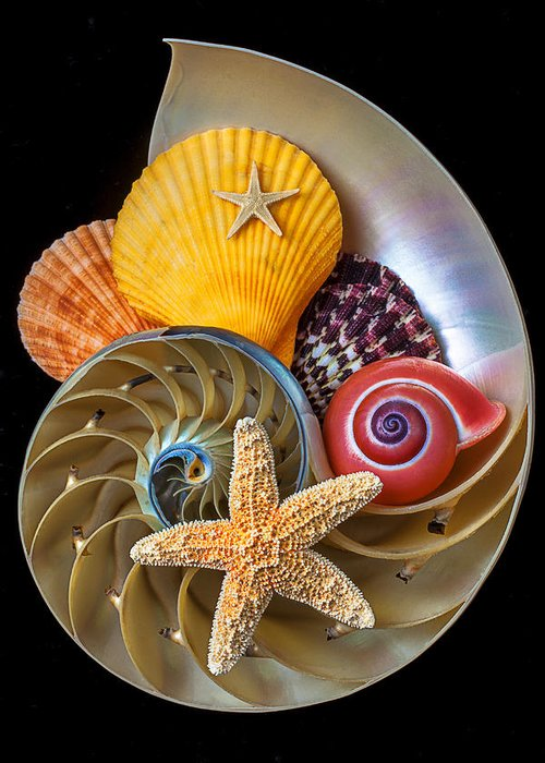 Chambered Nautilus Greeting Card featuring the photograph Nautilus With Sea Shells by Garry Gay