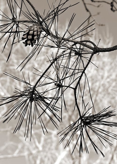Tree Greeting Card featuring the photograph Needles Everywhere by Marilyn Hunt