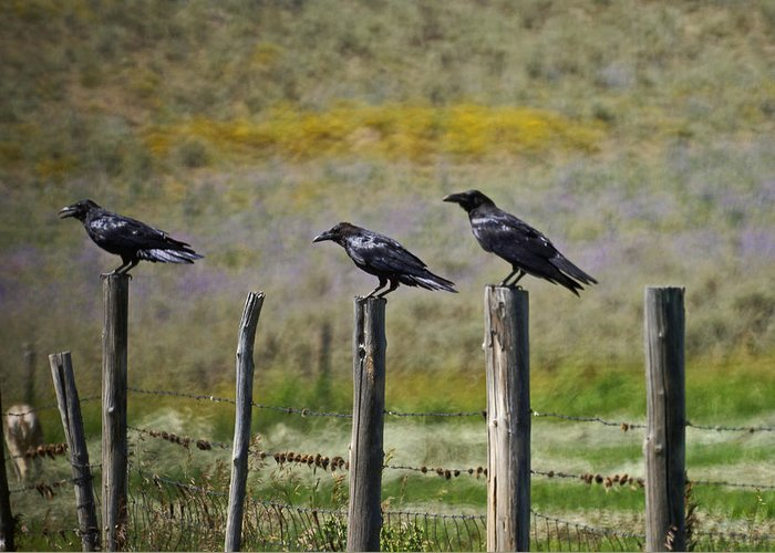 Crows Greeting Card featuring the photograph Neighborhood Watch Crows by Heather Coen