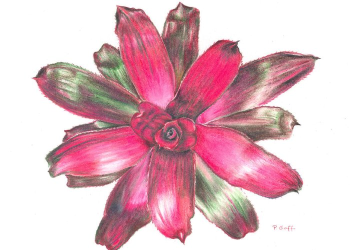 Bromeliad Greeting Card featuring the painting Neoregelia Puppy Love by Penrith Goff