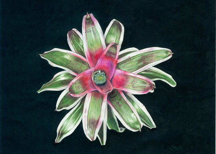 Neoregelia Greeting Card featuring the painting Neoregelia Terry Bert by Penrith Goff