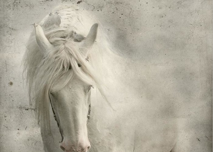 White Horse Greeting Card featuring the photograph Nesting Time by Dorota Kudyba