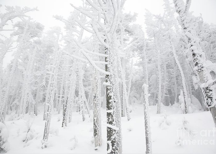 Snow Covered Greeting Card featuring the photograph New England - Snow Covered Forest by Erin Paul Donovan