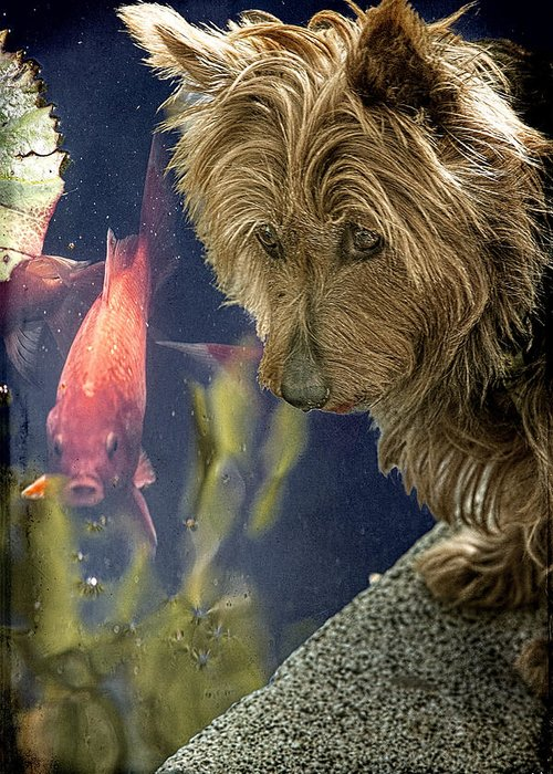 Koi Greeting Card featuring the photograph New Friends by Chris Lord
