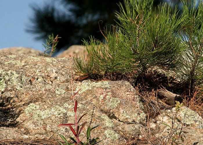 Attraction Greeting Card featuring the photograph New Growth by Mike Oistad