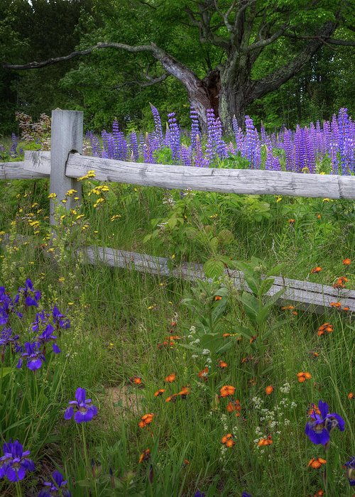 Wildflowers Greeting Card featuring the photograph New Hampshire Wildflowers by Bill Wakeley