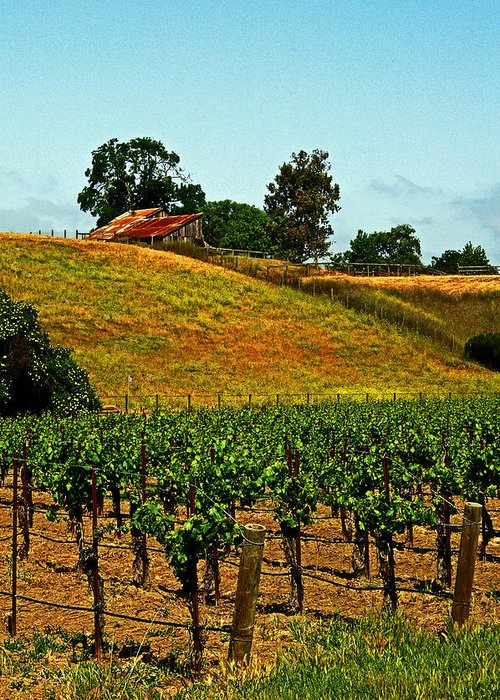 Vines Greeting Card featuring the photograph New Vineyard by Gary Brandes
