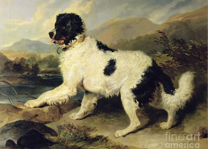 Newfoundland Greeting Card featuring the painting Newfoundland Dog Called Lion by Sir Edwin Landseer