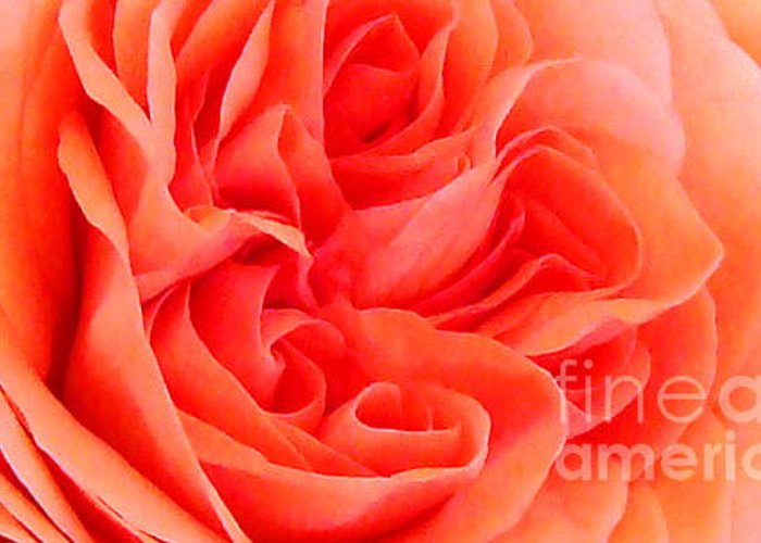 Flowers Greeting Card featuring the photograph Newport Orange by Pam Schmitt