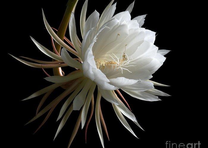 Night Blooming Cereus Stationery