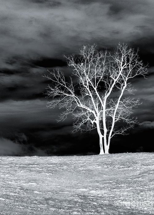 Tree Greeting Card featuring the photograph Night Sky by Kathy Jennings