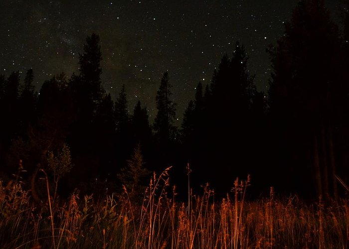 Landscape Greeting Card featuring the photograph Nighttime Meadow by Jon Bulotti