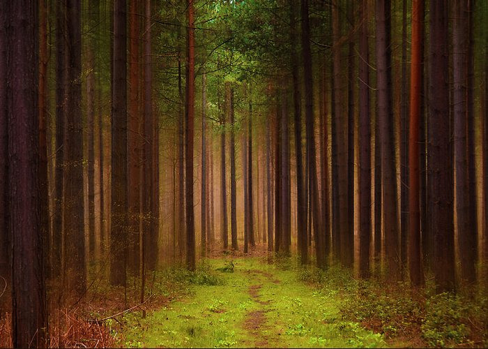 Forest Greeting Card featuring the photograph No Way Out by Svetlana Sewell