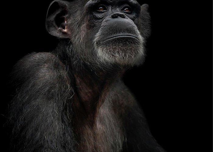 Primate Greeting Cards