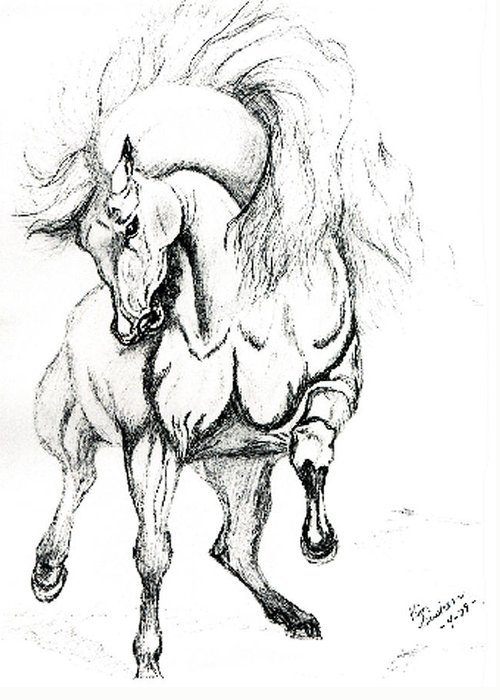 Horses Greeting Card featuring the drawing Noble Stallion by Kim Souza