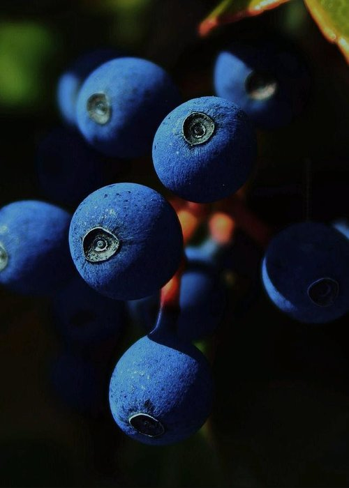 Blue Berry Photographs Greeting Cards