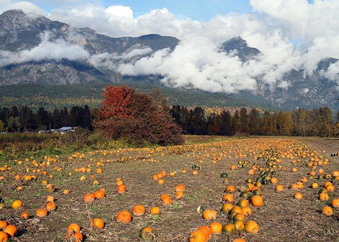 Farm Greeting Card featuring the photograph North Arm Farm Pumpkin Season Pemberton B.c Canada by Pierre Leclerc Photography