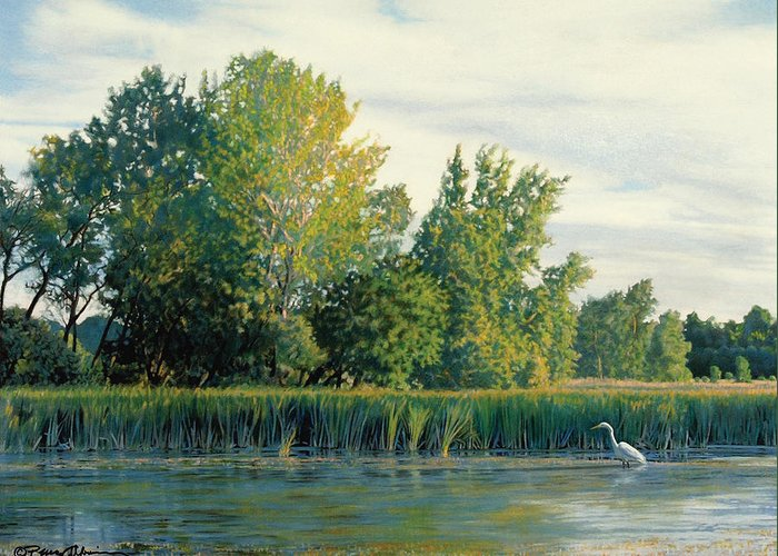 Great Egret Greeting Card featuring the drawing North Of The Grade-great Egret by Bruce Morrison