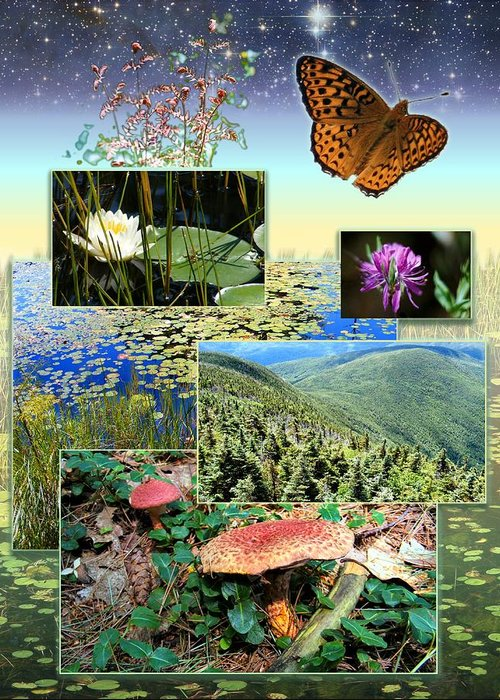 Landscape Greeting Card featuring the photograph Northern Appalachian Summer by Dave Martsolf