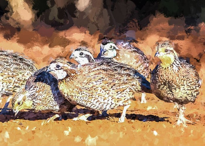 Northern Bobwhite Greeting Card featuring the digital art Northern Bobwhite Digital Art by Carol Fox Henrichs