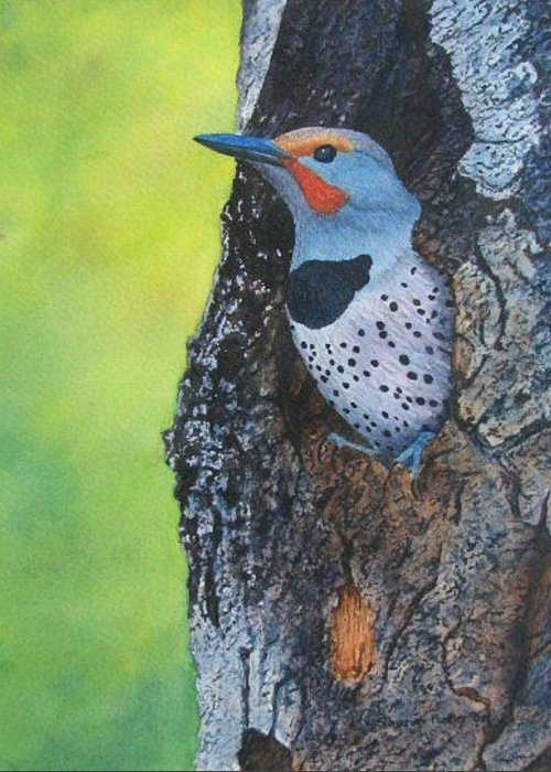 Bird Greeting Card featuring the painting Northern Flicker by Sharon Farber