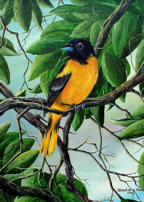 Oriole Greeting Card featuring the painting Northern Oriole by David G Paul