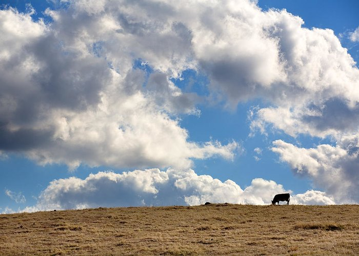 Big Sky Greeting Card featuring the photograph Not A Cow In The Sky by Peter Tellone