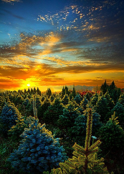 Horizons Greeting Card featuring the photograph Not Forgotten by Phil Koch
