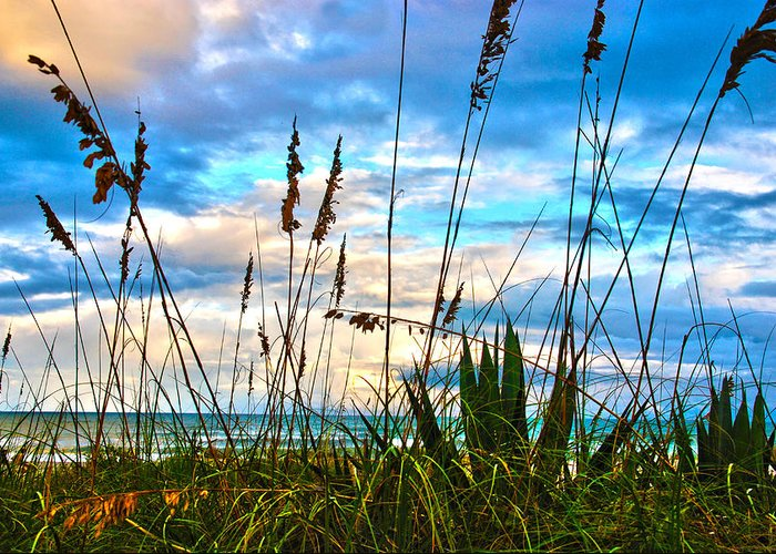 Beach Greeting Card featuring the photograph November Day At The Beach In Florida by Susanne Van Hulst