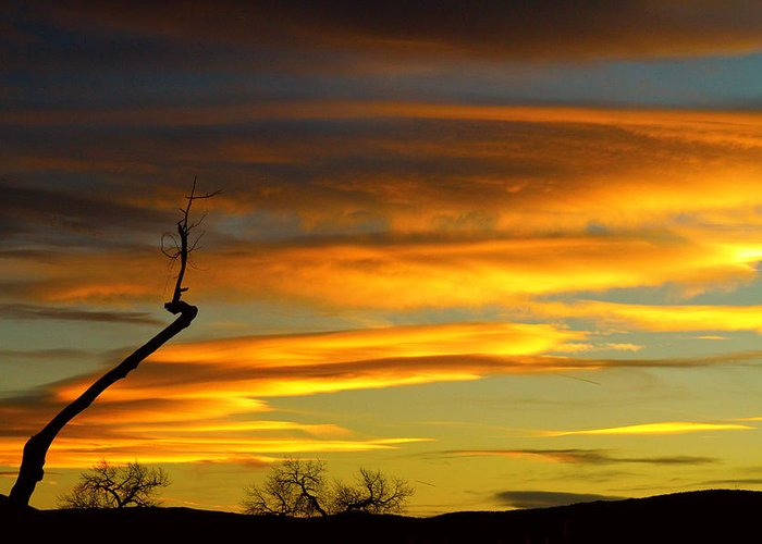 Tree Greeting Card featuring the photograph November Sunset by James BO Insogna