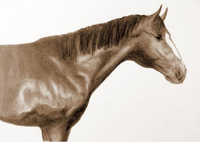 Horses Head Greeting Card featuring the drawing Number 3 by Susan Tilley