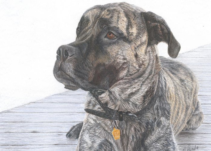 Dog Greeting Card featuring the drawing Nyla by Marlene Piccolin