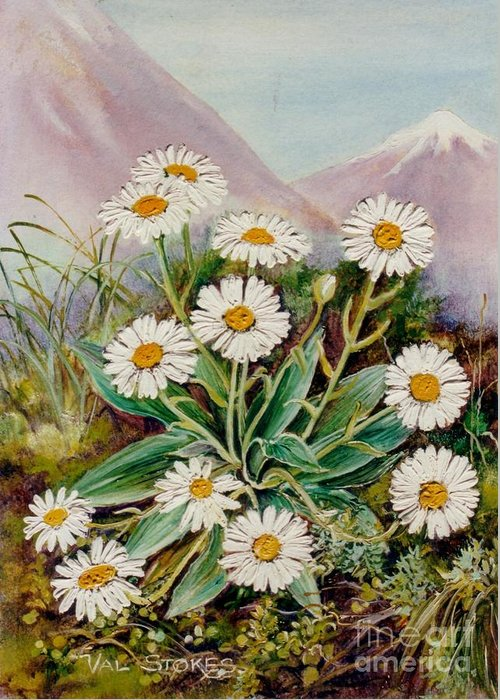 Mountains Greeting Card featuring the painting Nz Mountain Daisy by Val Stokes