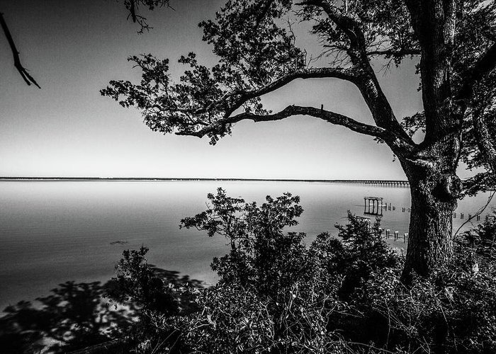 Black-and-white Greeting Card featuring the photograph Oak On A Bluff - Black And White by Jef Bond