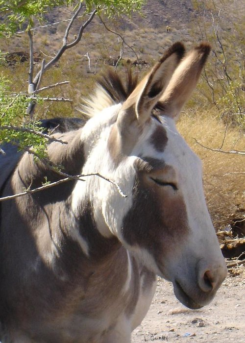 Photography Greeting Card featuring the photograph Oatman Burro by Lessandra Grimley