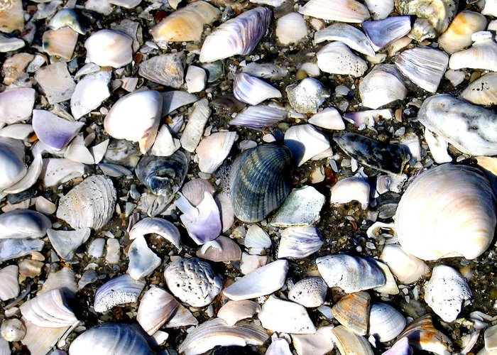 Ocracoke Greeting Card featuring the photograph Ocracoke Shells by Wayne Potrafka