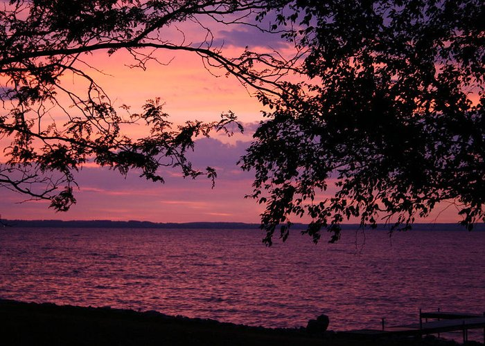 Sunrise Pink Sky Winnebago Trees Lake Greeting Card featuring the photograph October Sunrise On Winnebago by Jack G Brauer