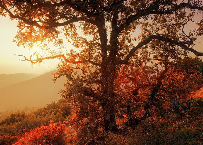 Tree Greeting Card featuring the photograph October Sunset by Giovanni Allievi